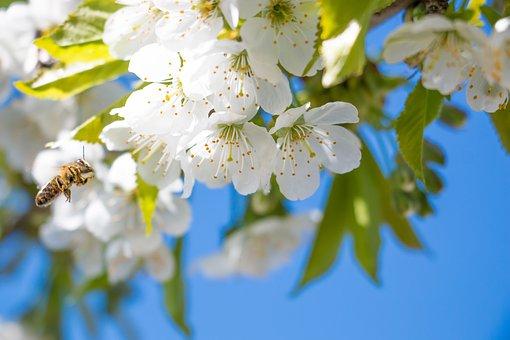 flower-3127647__340